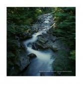 Zen Water, Denny Creek
