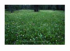 Kettlepot Meadow